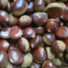 bulk sell chestnut fast delivery