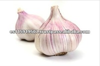 Spain Best Quality Vegetables Fresh Garlic