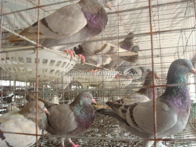 uganda poultry farm automatic chicken layer cage/The New type and superior fancy pigeon cages for sale for poultry farm