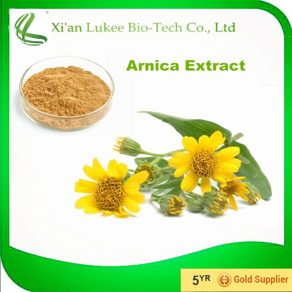 Arnica Flower Extract Powder to Boost Blood Plant Extract