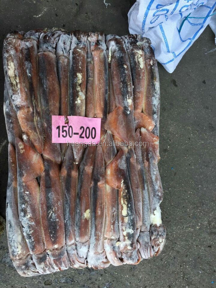 New Cargo IQF Whole Round Frozen Illex Squid 150-200g