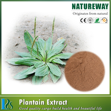 Top Sale plantago seed extract/plantago seed extract powder/plantain herb seed extract