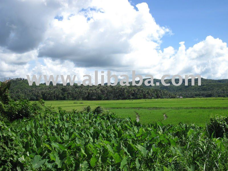 FARM LAND BORACAY CATICLAN AKLAN
