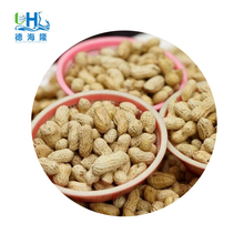 Cheap price and quality china big peanut in shell for palm kernel cake