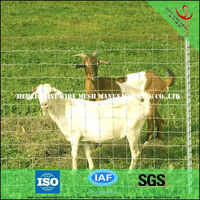 Metal livestock farm cattle fencing