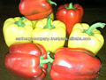 INDIAN BELL PEPPER
