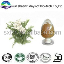 ISO Factory Supply Achillea Millefolium Extract, Yarrow Flower Extract Powder