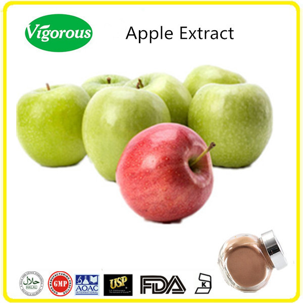 free sample apple extract powder / malus pumila extract polyphenols