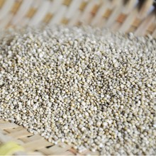 High quality Chenopodium quinoa grain