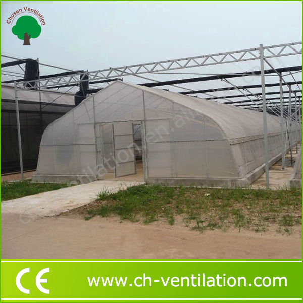 Commercial agricultural commercial galvanized steel frame greenhouse