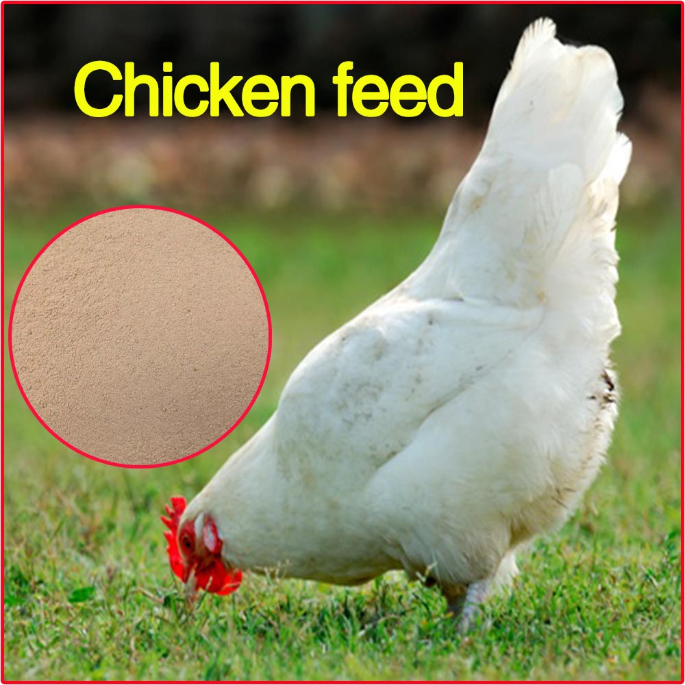 High protein chicken feed