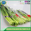 Low price safe garlic sprouts China manufacturer