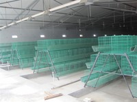 Cages for chickens,a type galvanized poultry farming chicken cage