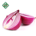 50 mm size fresh red onion supplier