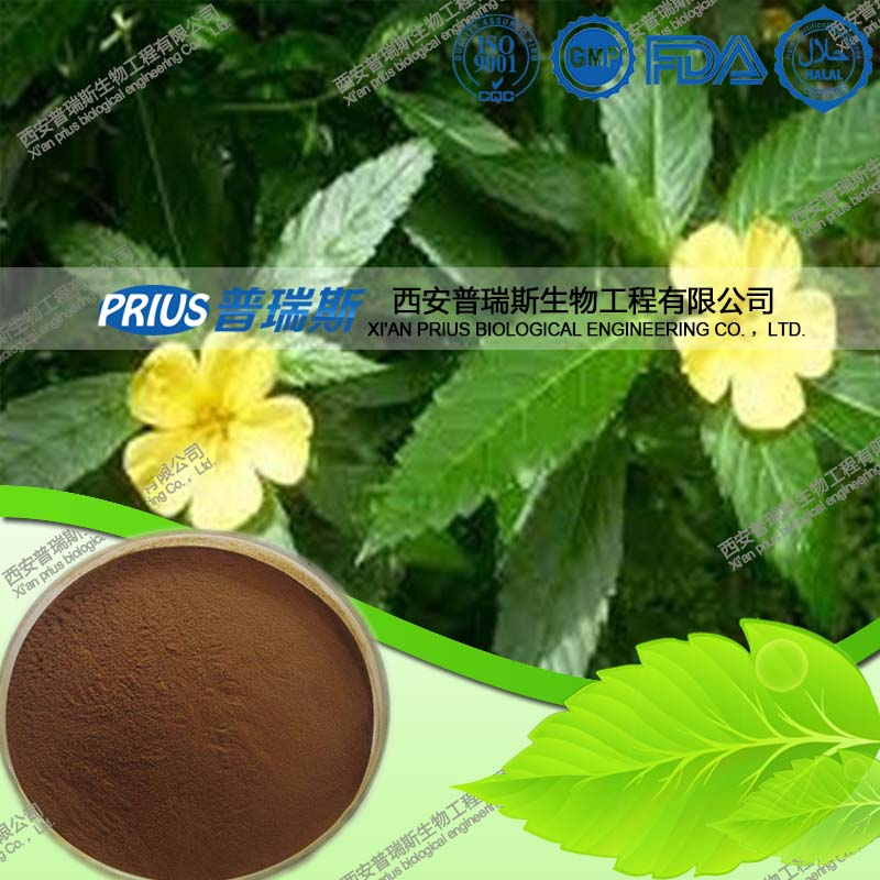 Best Price high quality pure Damiana extract