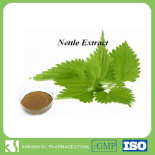 Stinging nettle root powder Nettle Root Extract 7% Silicic Acid