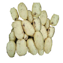 ISO Certification Chinese Factory sale Fresh Potato