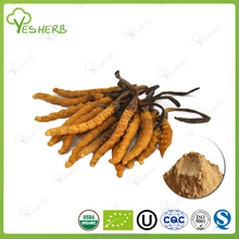 hot selling cordyceps extract powder king of cordyceps sinensis