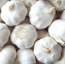 supply offer frozen fresh 5.0 cm normal white pure snow white garlic to pakistan malaysia