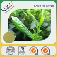 free sample FDA KOSHER HACCP manufacturer tea 98% polyphenol,catechin,EGCG extract green tea