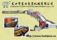 CE and ISO9001 Approved Apple Washing Waxing Grading Processing Machine