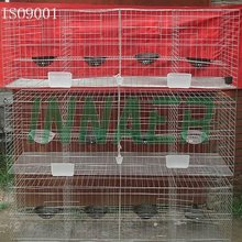 Supply For China Standard Pigeon Cage(ISO9001) for Poultry Farm
