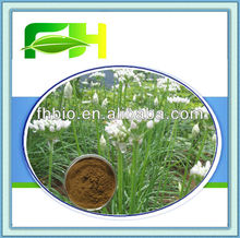 100% Natural Tuber Onion Seed Extract/Semen Allii Tuberosi P.E.