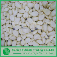 Hot-Selling high quality low price peeled garlic cloves in brine