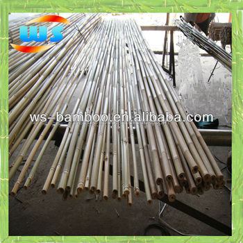 Househodl good bamboo/Tonkin canes for sale/bamboo poles for the orchard