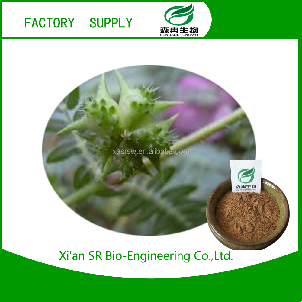 Reliable and Cheap rganic plant extract tribulus terrestris for wholesale