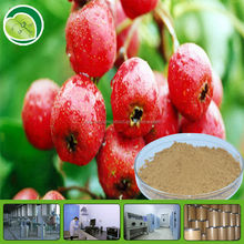100% natural GMP certificated Hawthorn berry leaf extract