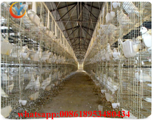 Best Sale Hot-dip Galvanized Pigeon Layer Breeding Cage