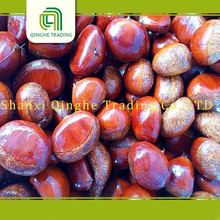Brand new machine roasting chestnuts with great price frozen castanea mollissima
