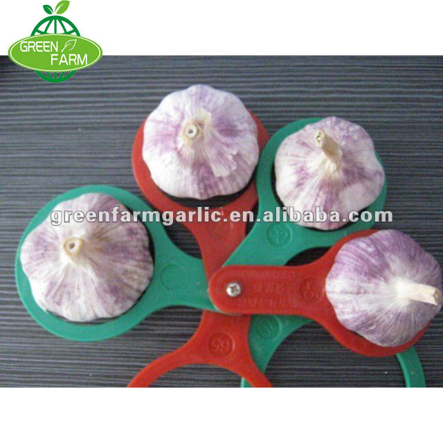 fresh red garlic in cold storage from china