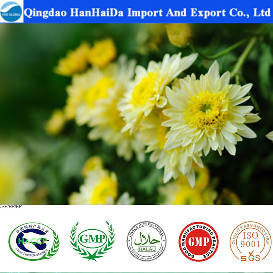 Supply high quality Chrysanthemum cut flower with reasonable price and fast delivery on hot selling !!