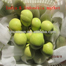 2013 new crop long handful shandong pear