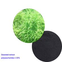 High Quality seaweed extract polysaccharides 20 %