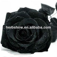 Black Rose Seeds/Green/Yellow/Gold/Purple/Blue Rose Seeds