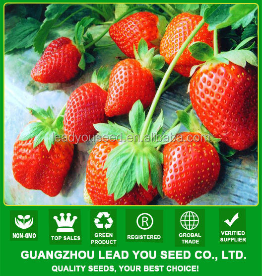 JSB01 Rose queen strawberry seeds for sale, strawberry seeds