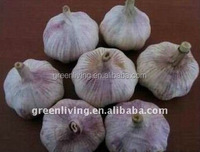 Chinese best delicious garlic from garlic city