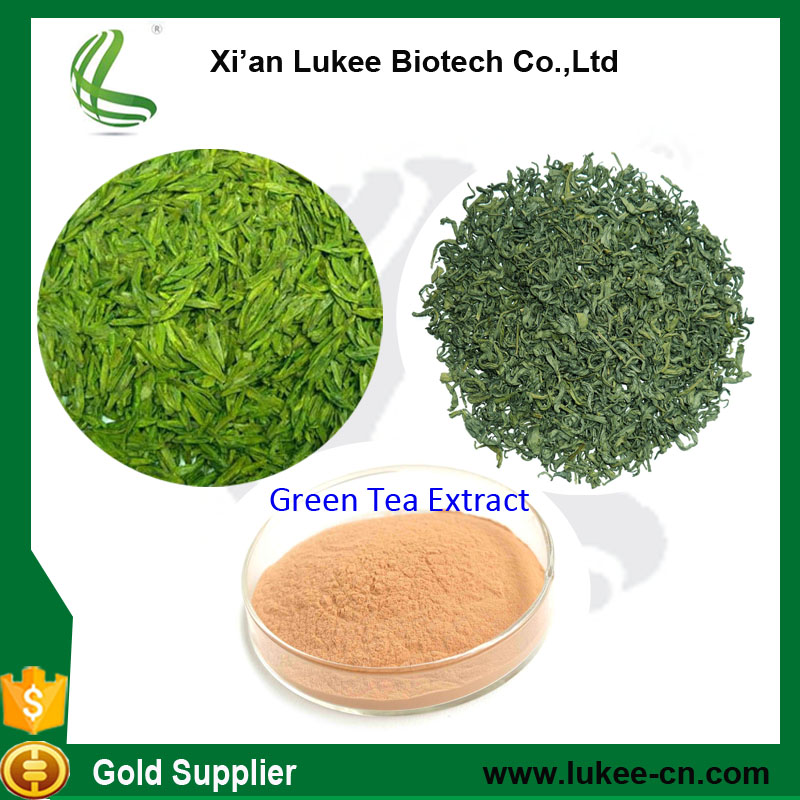 100% Natural pure water soluble green tea powder/bio green tea extract/green tea extract bulk