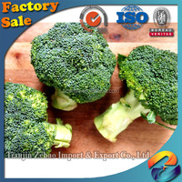 Chinese fresh broccoli good quality white broccoli