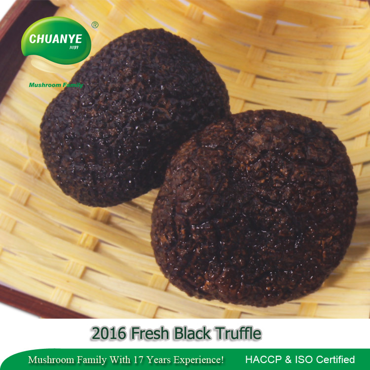 Hot Sale Wild Fresh Truffle Professional Manufacturer