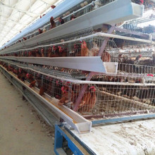 African Market Layer Chicken Battery Cage/Chicken Egg Layer Cages/Poultry Farm Design