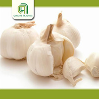 Brand new nature garlic for wholesales