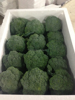 2016 (11-13cm ) chinese fresh broccoli cheap price and good quality