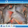 seafood export IQF frozen fresh farming pomfret fish