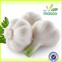 natural organic fresh white garlic export price in china