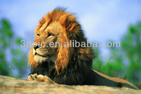 PET/PP material high resolution animal 3d lion picture