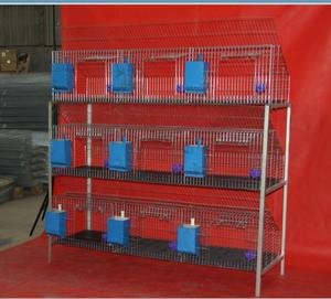 cheap commercial automatic rabbit cages / poultry cages for sale